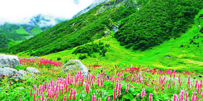 Valley of Flowers in Uttrakhand